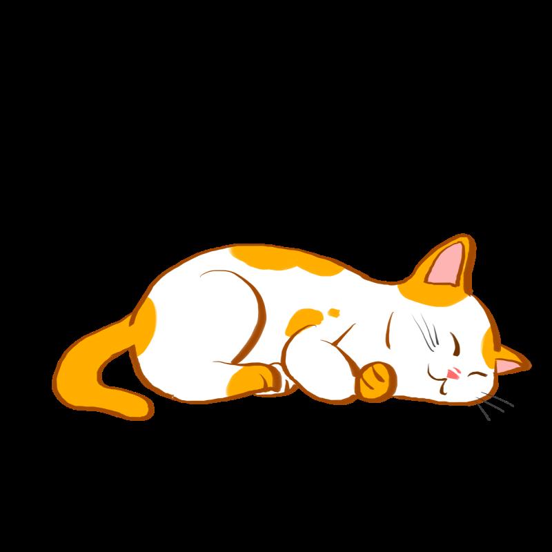 坏坏猫搜索 v1.5.0.5去广告/去推荐/破解/至尊版